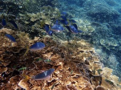 La gran barrera de coral astralia