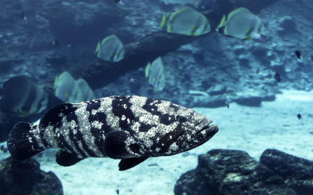fauna La gran barrera de coral