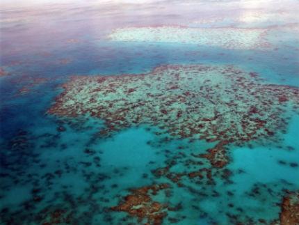 isla Heron coral