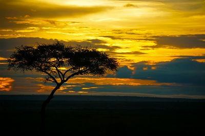Atardecer en la reserva de Masai Mara