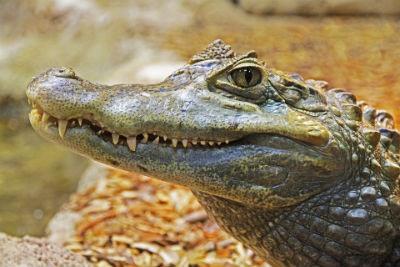 Guia turistica basica de Los Everglades