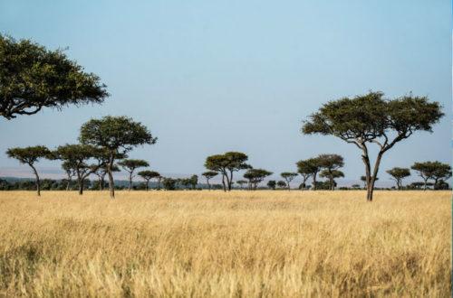 Reserva de Masai Mara en Kenia