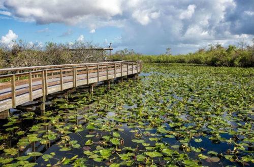 Visita al Parque Nacional de los Everglades